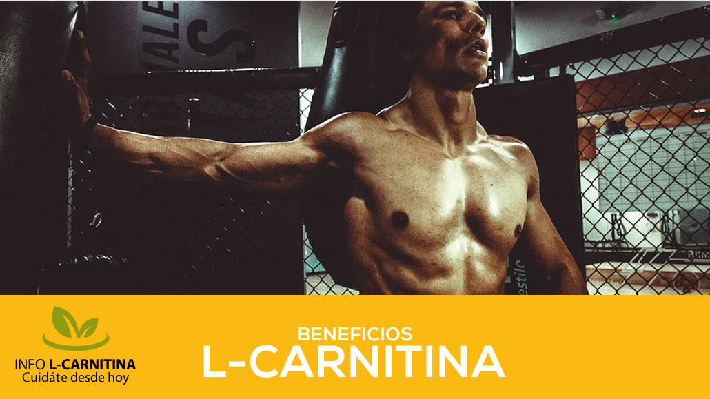 Beneficios L Carnitina