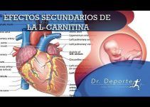 Efectos Secundarios De La L Carnitina